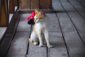 デッキにいた猫
