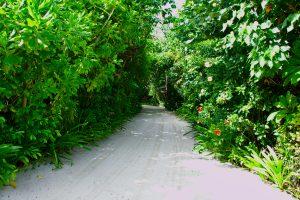 島の中は自然豊か